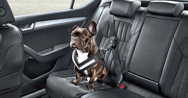 attache chien voiture