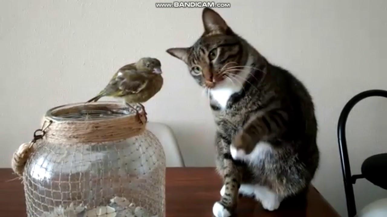 chat oiseau