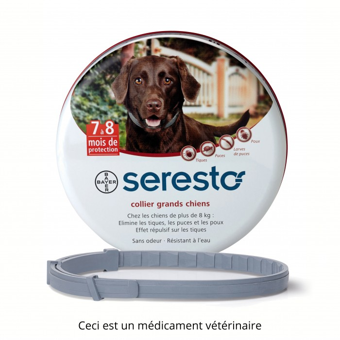 collier anti puce pour chien