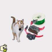 collier electrique chat