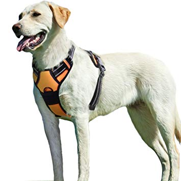 harnais chien anti traction