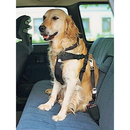 harnais de sécurité pour chien