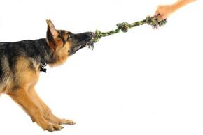 jouer chien