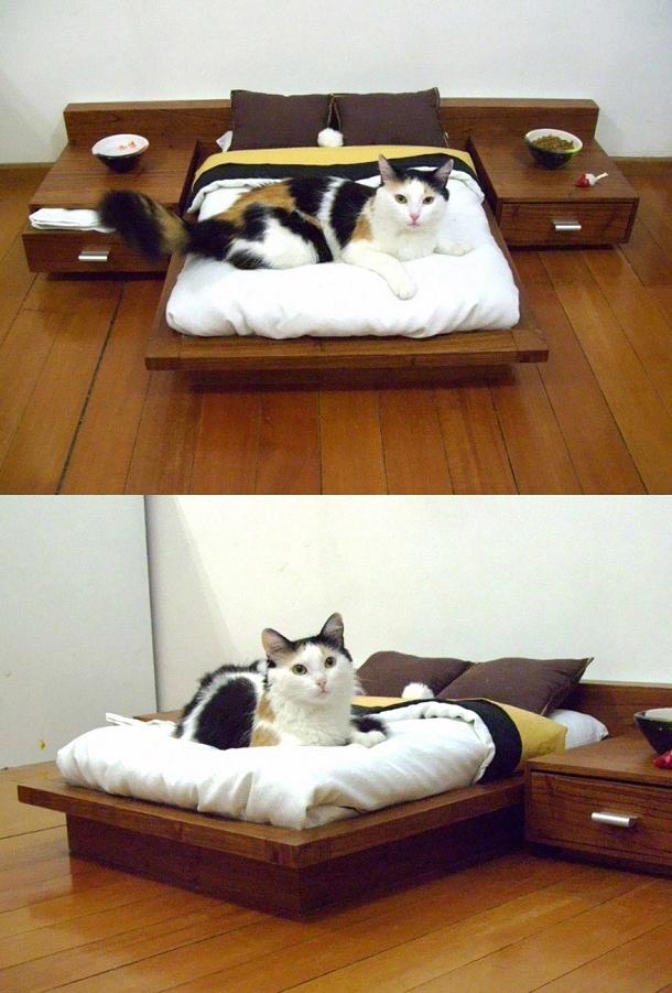 pour chat