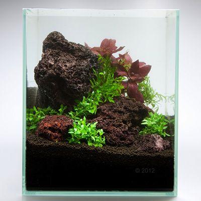 roche volcanique aquarium