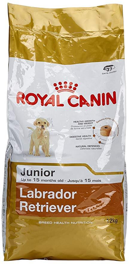 royal canin junior labrador