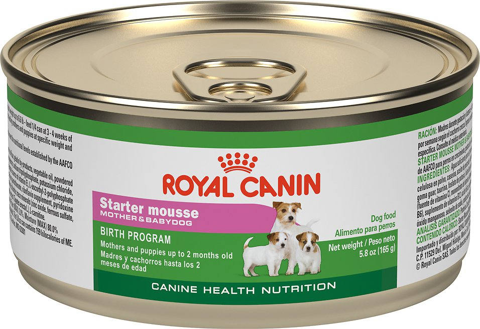 royal canin puppy starter mousse