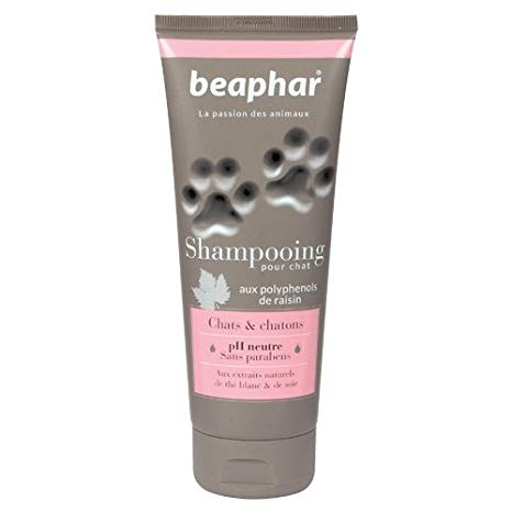 shampoing chat