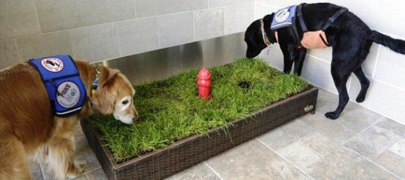toilette chien